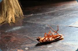 Дезинфекция, озонирование, устранение запаха отравы (инсектицидов), после уничтожения (травли, выведения) насекомых в квартире, коттедже, офисе. Наш телефон: 8 (977) 342-10-45. Санитарная служба. Москва.